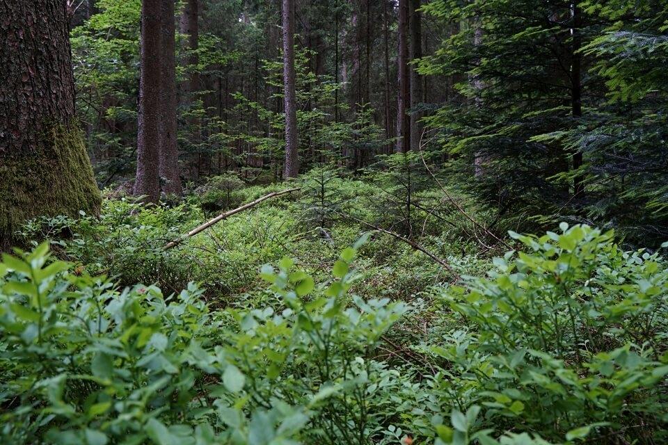 Verwunschene Natur im Schwaebischen Wald
