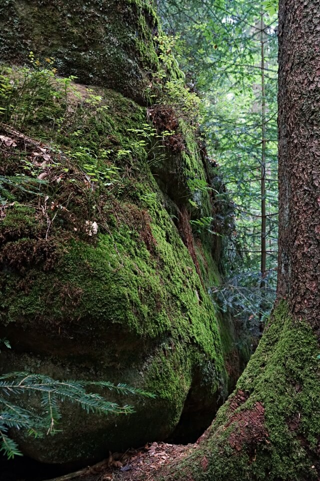 Brunnen und Haegelsklinge im Naturschutzgebiet Schwaebisch Fraenkischer Wald