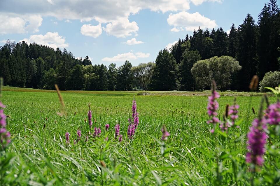 Naturschutzgebiet Wiesentaeler bei der Menzlesmuehle