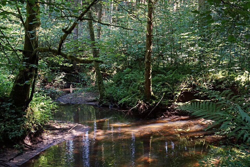 Rottalweg an der Finsteren Rot auf dem Muehlenwanderweg durch den Schwaebischen Wald