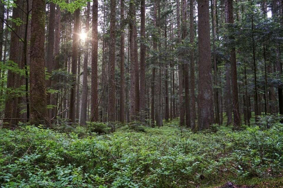 Der Schwaebisch Fraenkische Wald in Hohenlohe Baden Wuerttemberg