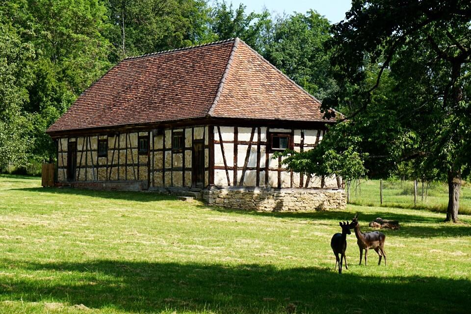 Rehe im Park von Schloss Favorite in Ludwigsburg