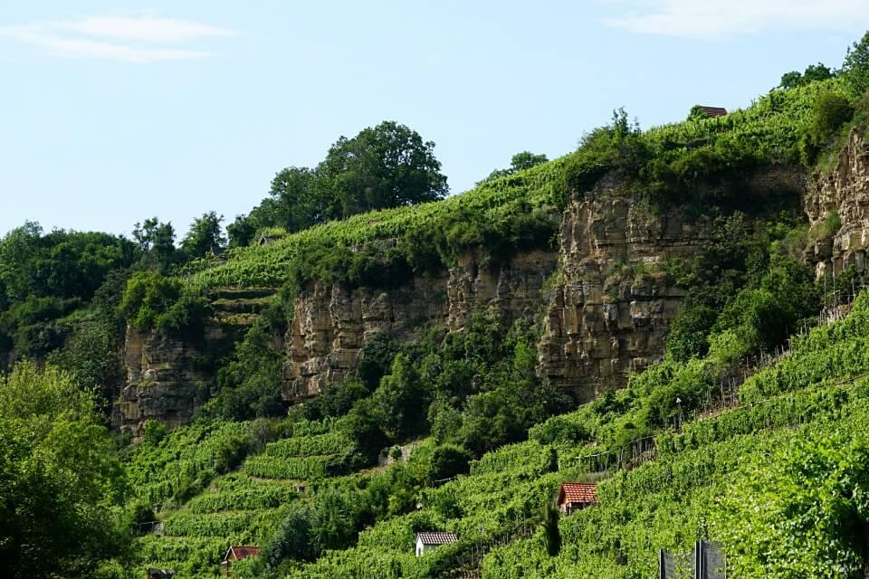Steillagen Weinbau in Ludwigsburg