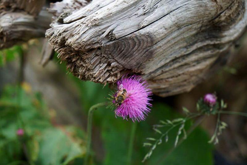 Pflanzen in der Bergwelt der Schweizer Voralpen im Kanton Freiburg