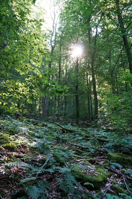 Wanderweg Neckarsteinach im Odenwald
