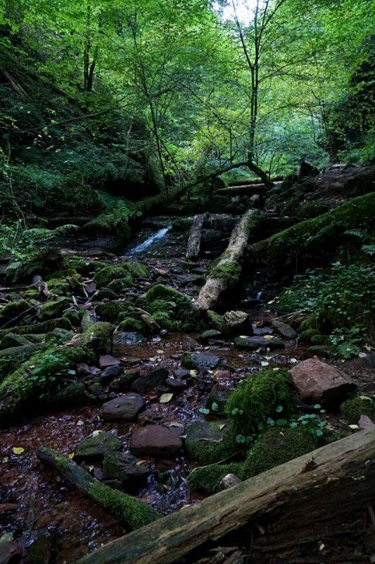 Die Wolfsschlucht im Odenwald