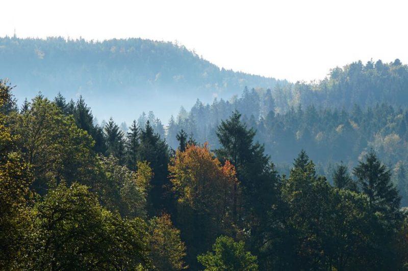 Morgenstimmung mit Nebel im Schwaebischen Wald