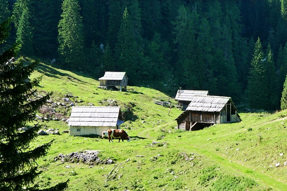 Wanderung auf die Alm Planina Pri Jezeru im Triglav Nationalpark