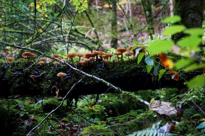 Herbst in der Wieslaufschlucht beim Wandern im Schwaebischen Wald