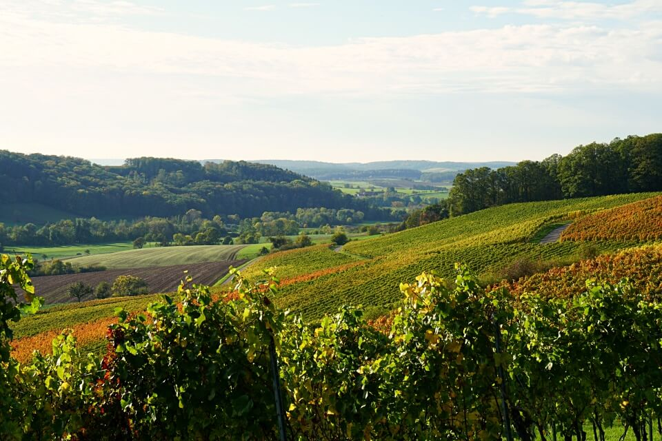 Weinlandschaft in Hohenlohe bei Bretzfeld