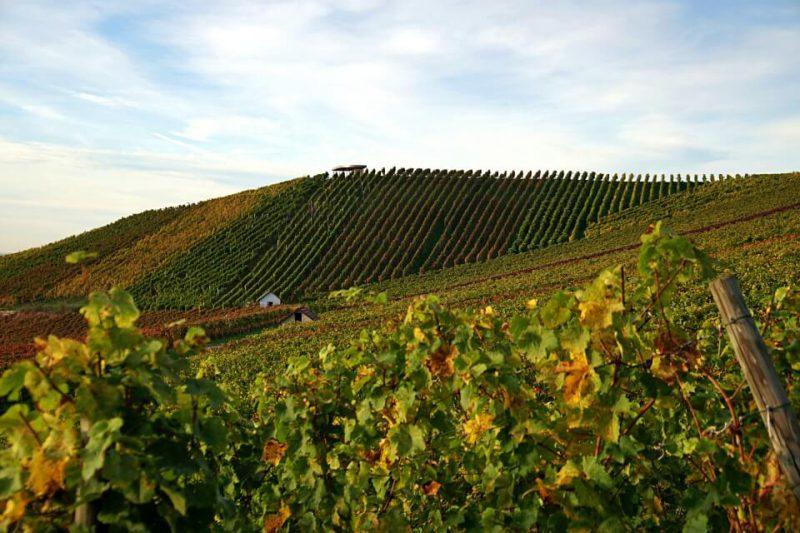 Weinberge in Hohenlohe auf dem Weinlehrpfad Heuholz