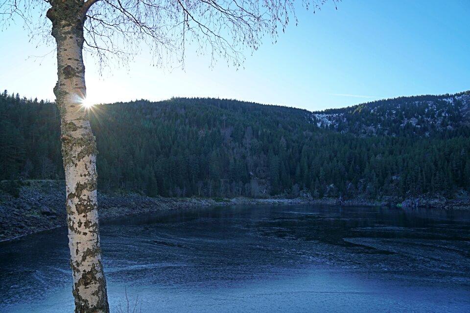Der Lac Noir in den Vogesen im Winter
