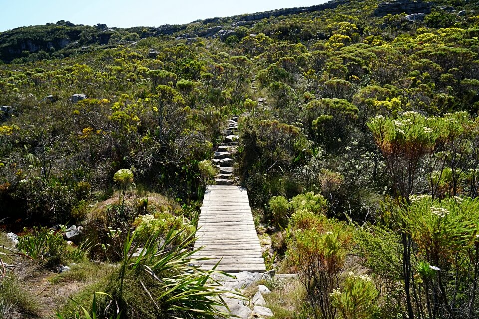 Tolle Natur auf unserer Tafelberg Wanderung