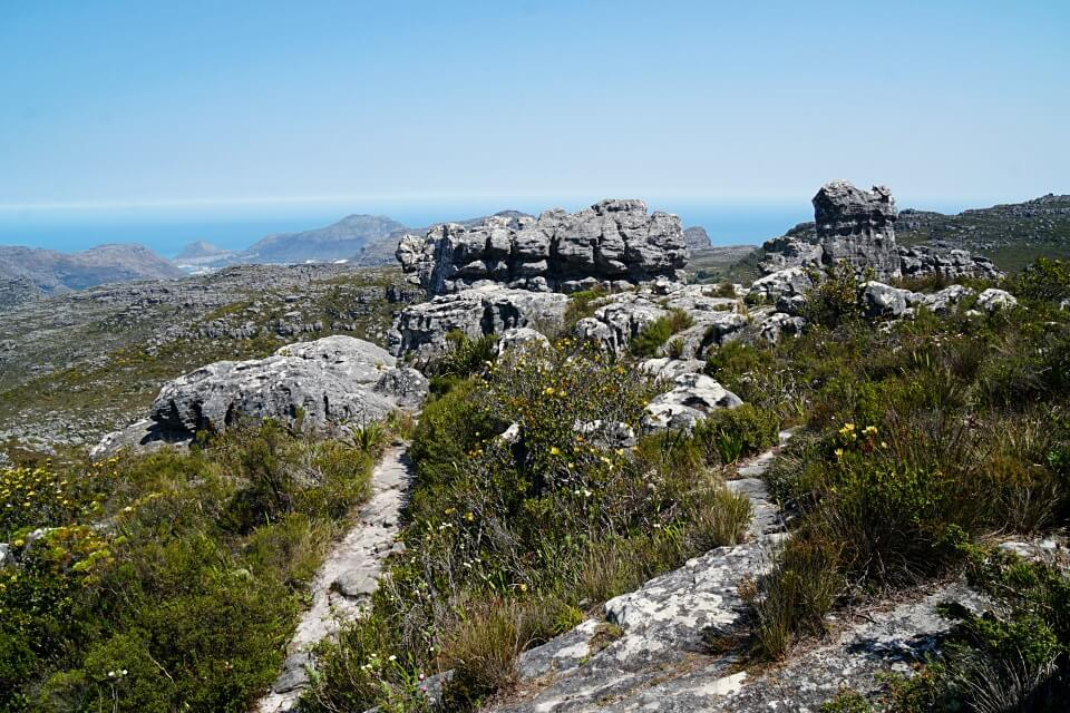 Auf dem Tafelberg in Kapstadt Suedafrika
