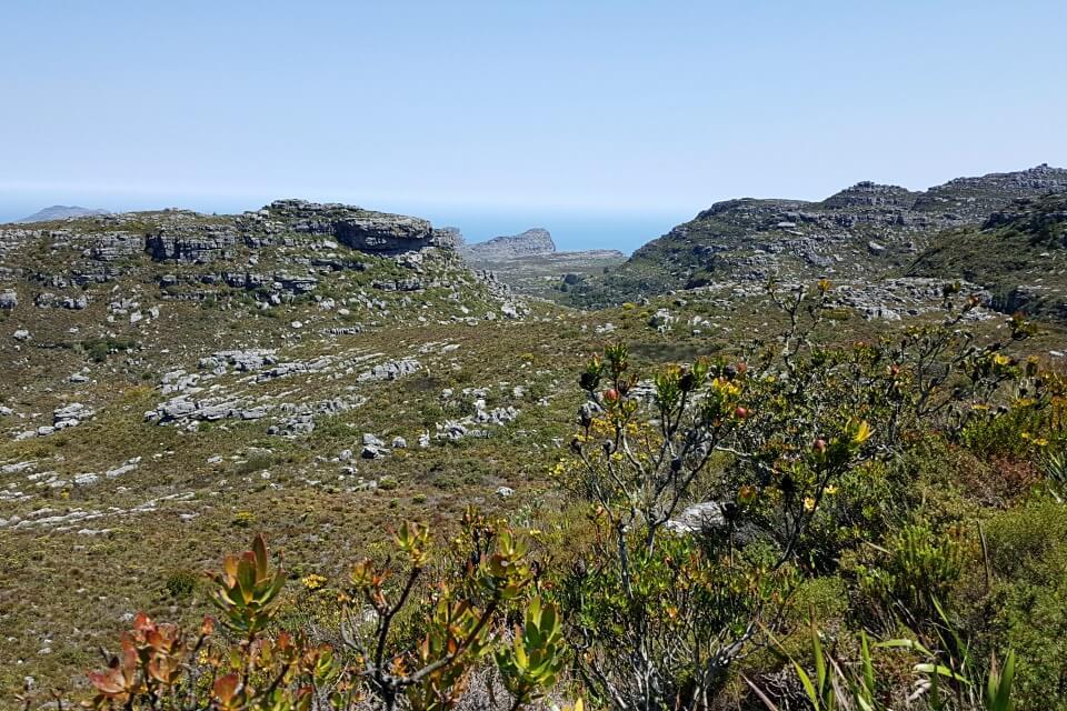 Ausblicke beim Wandern auf den Tafelberg in Kapstadt