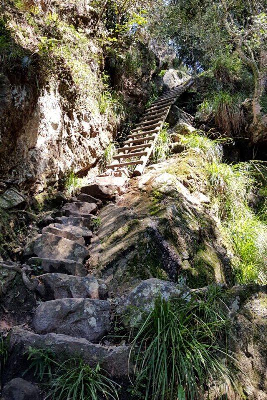 Leiter in der Skeleton Gorge beim Wandern auf den Tafelberg