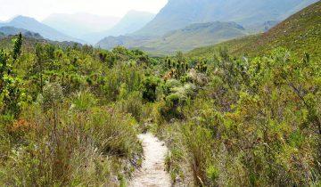 Palmiet River Trail im Kogelberg Nature Reserve Suedafrika