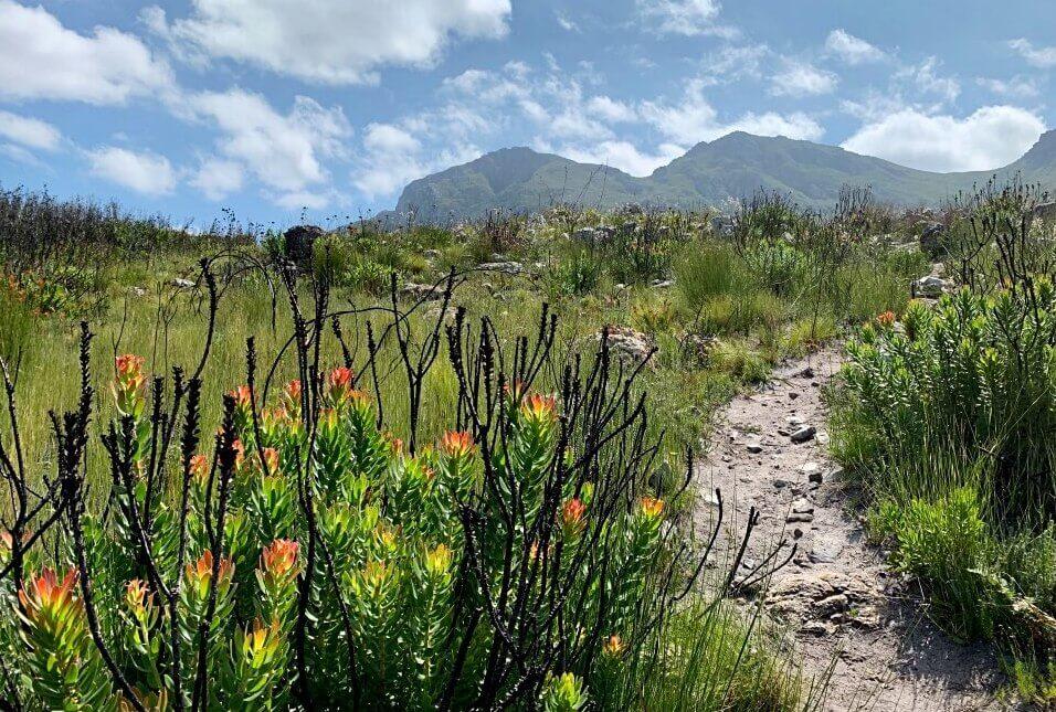 Fynbos und Pfade auf dem Palmiet River Trail