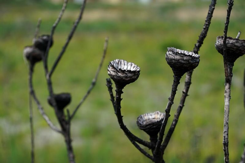 Verbrannter Fynbos im Kogelberg Nature Reserve