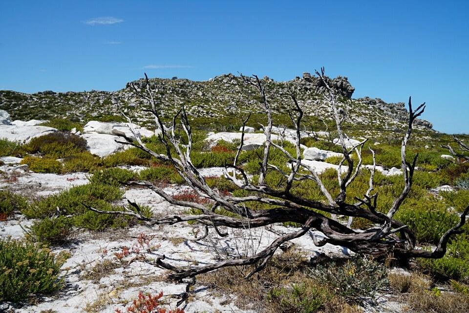 Der Thomas T Tucker Trail auf der Kap Halbinsel in Suedafrika