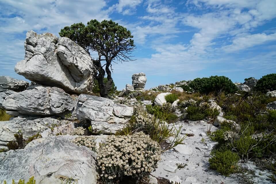 Landschaft auf dem Thomas T Tucker Trail am Kap der Guten Hoffnung