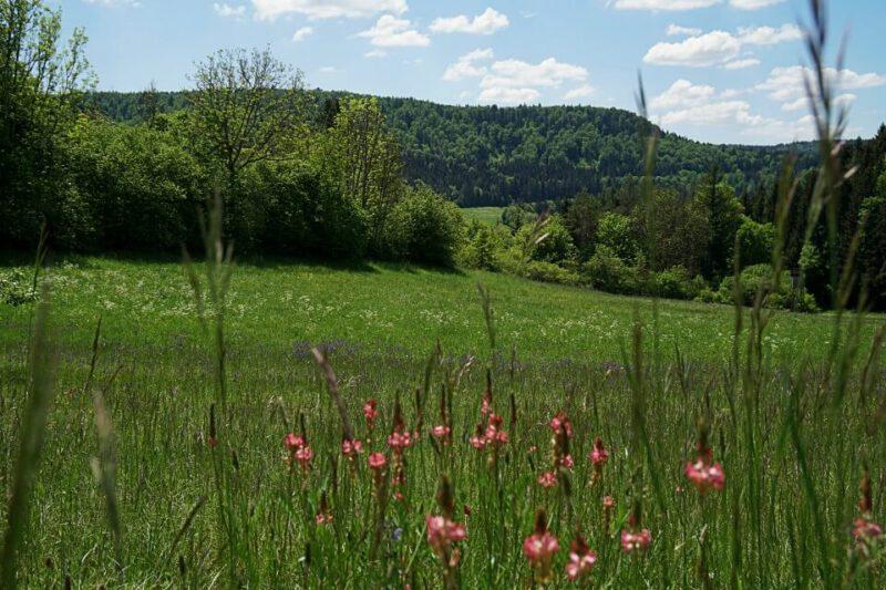 Wiesen beim Wandern im Donautal auf der Schwaebischen Alb