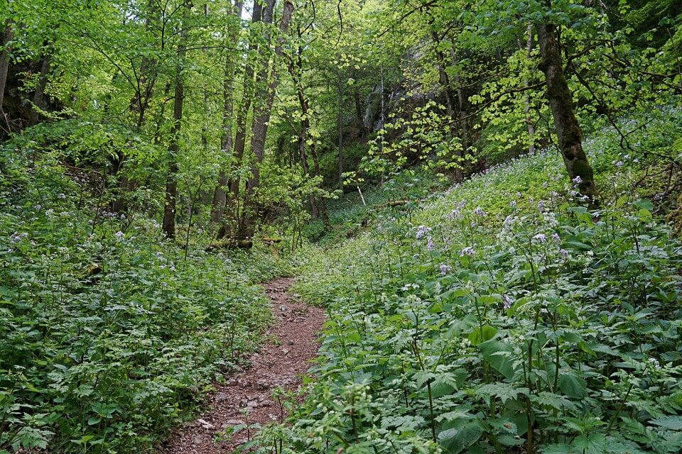 Wald auf der Donaufelsentour im Oberen Donautal der Schwaebischen Alb