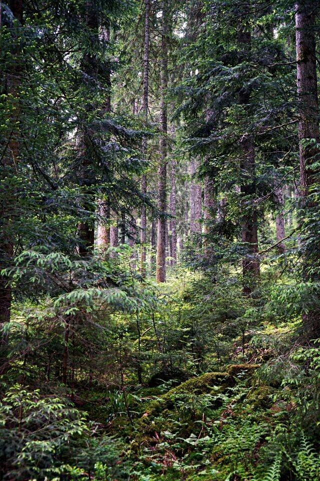 Mitten im Schwarzwald beim Rosshimmelwasserfall