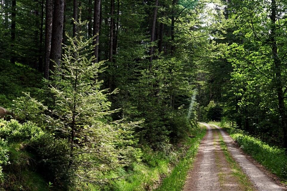Wanderweg Naturgewalten Tour