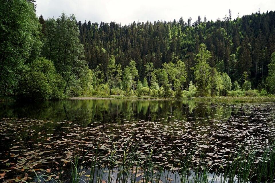 Der Ellbachsee im Schwarzwald auf unserer Naturgewalten Tour Wanderung um Baiersbronn Mitteltal