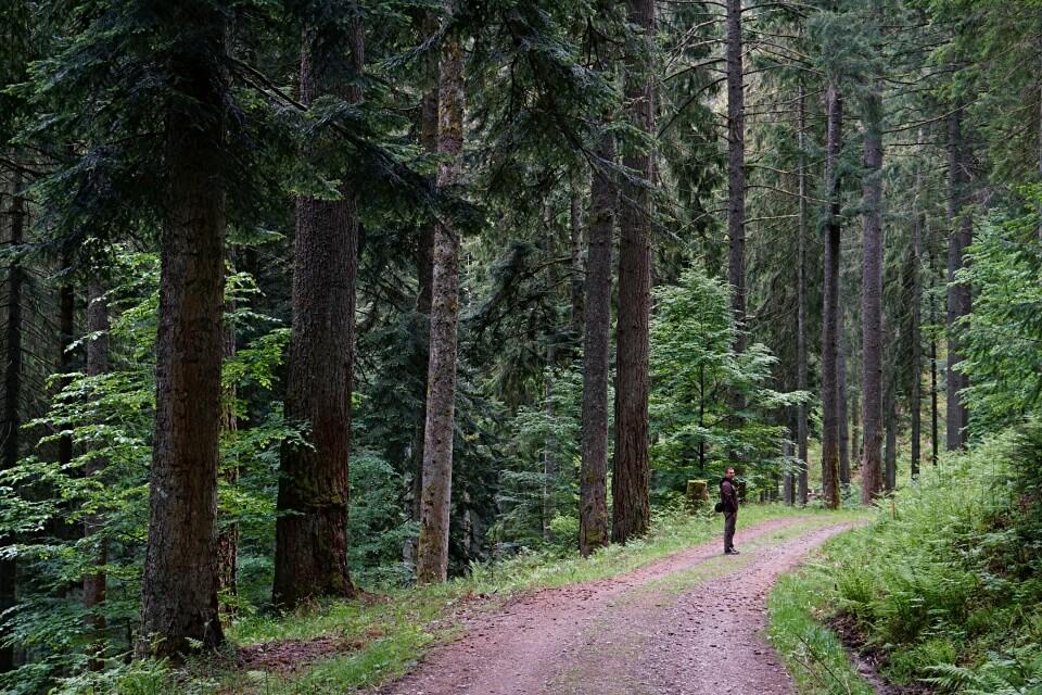 Forstwege auf der Naturgewalten Tour im Schwarzwald