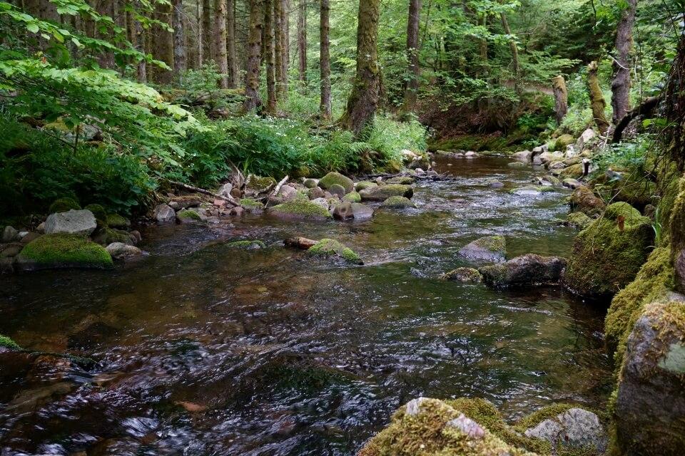 Der Gute Ellbach bei Mitteltal im Schwarzwald