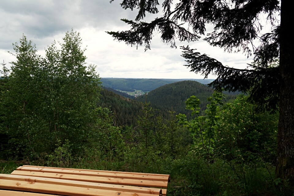 Himmelsliege beim Wandern im Schwarzwald