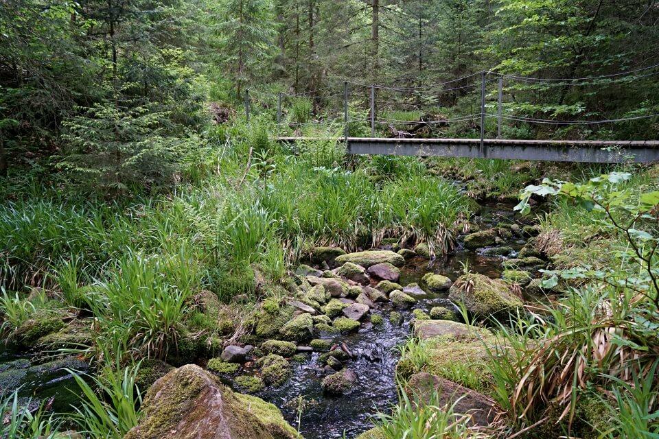 Hier beginnt ein toller Pfadabschnitt auf der Naturgewalten Wanderung im Schwarzwald
