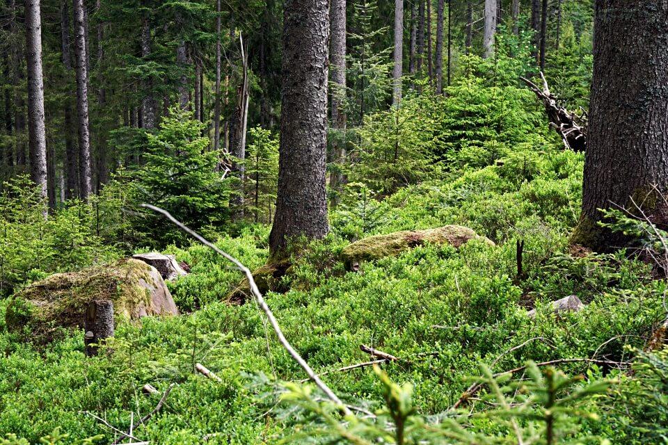 Waldblicke auf der Naturgewalten Tour