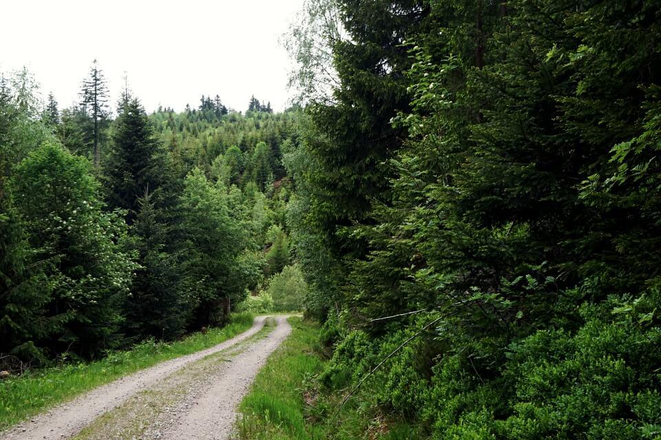 Schotterweg auf der Naturgewalten Wanderung um Baiersbronn
