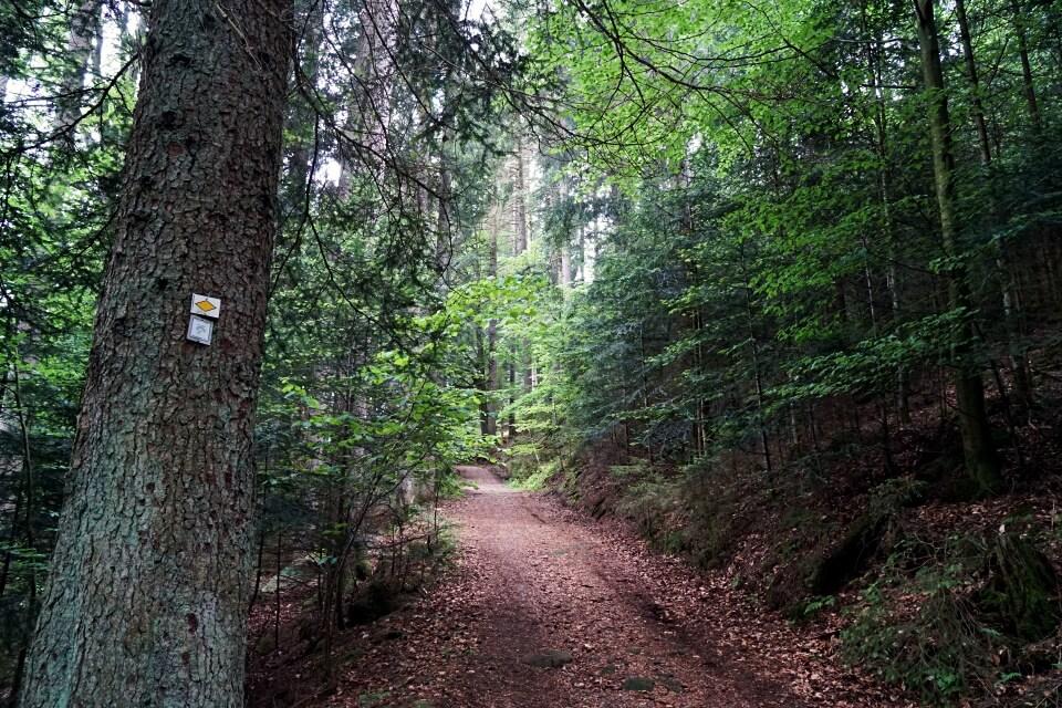 Start Wanderweg Naturgewalten Tour in Baiersbronn Mitteltal im Schwarzwald