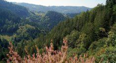 Wandern auf dem Premiumwanderweg Karlsruher Grat in Ottenhoefen im Schwarzwald