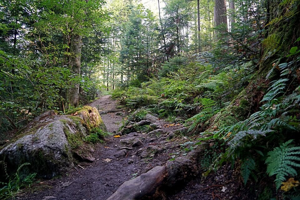 Waldweg Ottenhoefen Karlsruher Grat im Schwarzwald