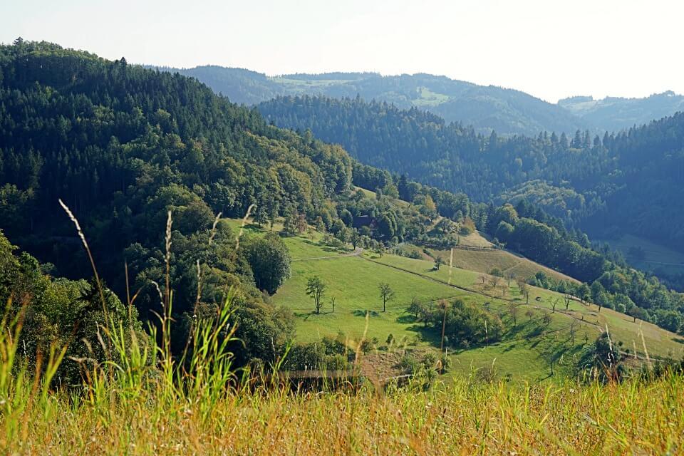 Ausblick auf den Schwarzwald um Ottenhoefen