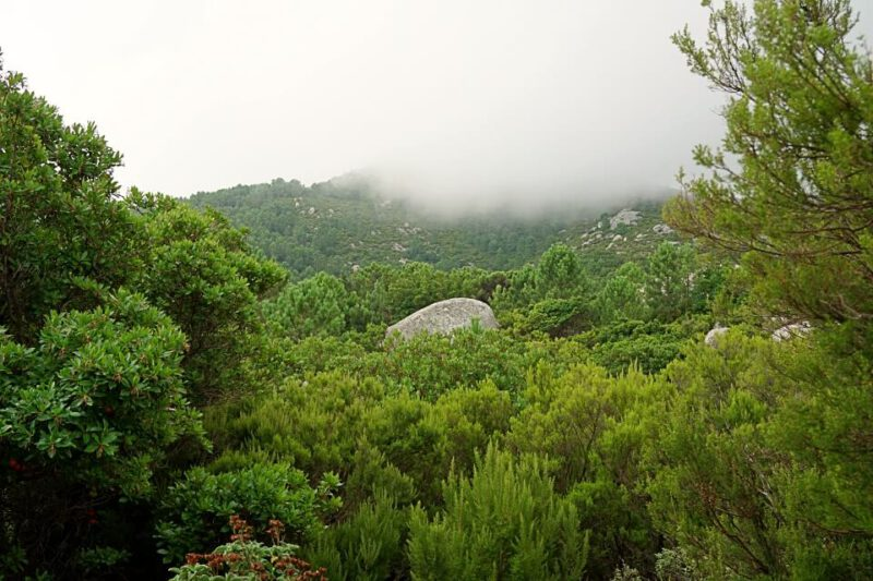 Wanderung auf Elba von Marciana Alta nach Pomonte