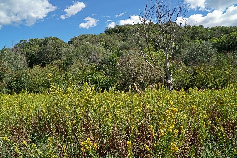 Natur im Naturpark Maremma in der Toskana