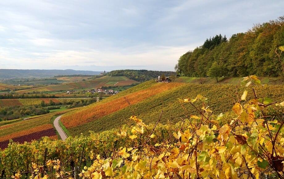 Wein Wanderung im Naturpark Stromberg Heuchelberg