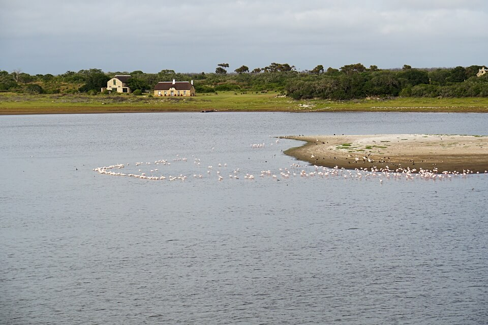 Flamingos im De Hoop Vlei
