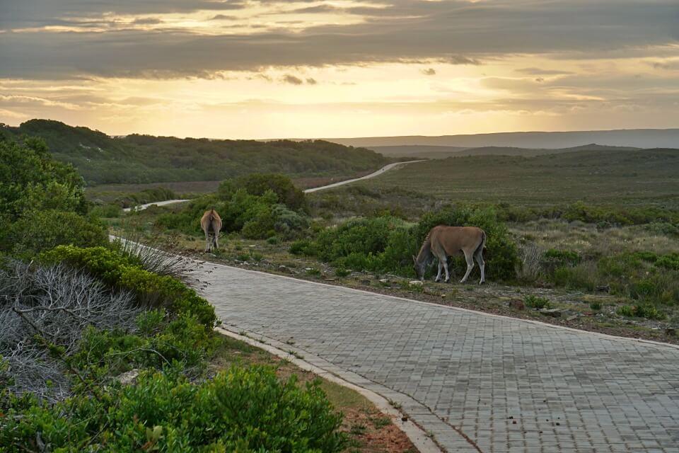 Abendstimmung im De Hoop Nature Reserve