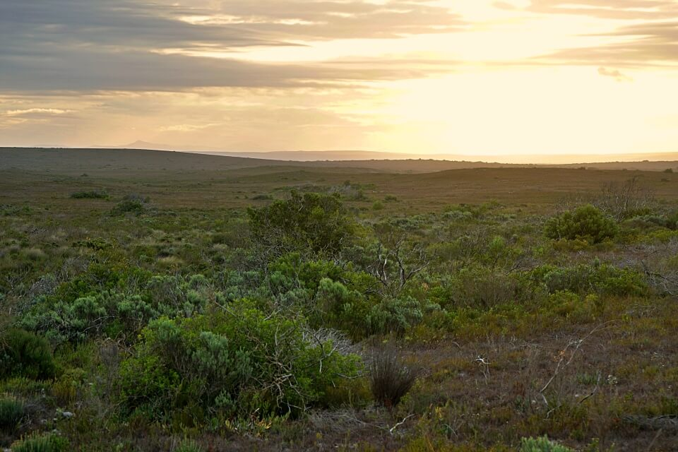 Sonnenuntergang im De Hoop Nature Reserve